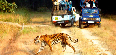 wildlife_rajasthan