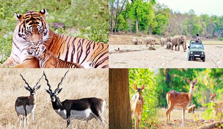 rajasthan-wildlife-tour